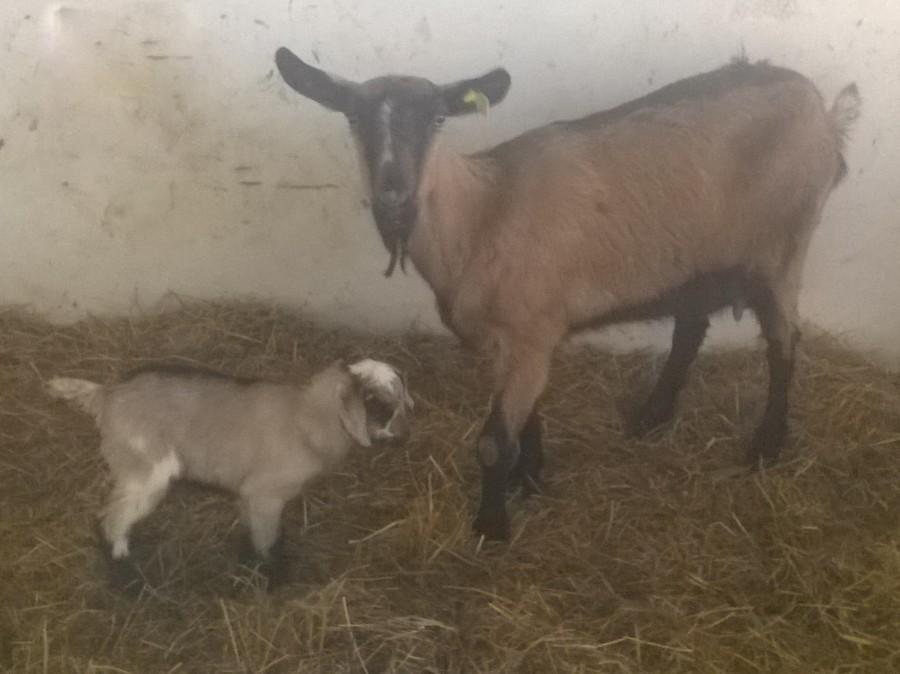 Il maschietto nato stamattina e la sua mamma <3